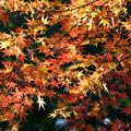 Photos: オレンジ系も