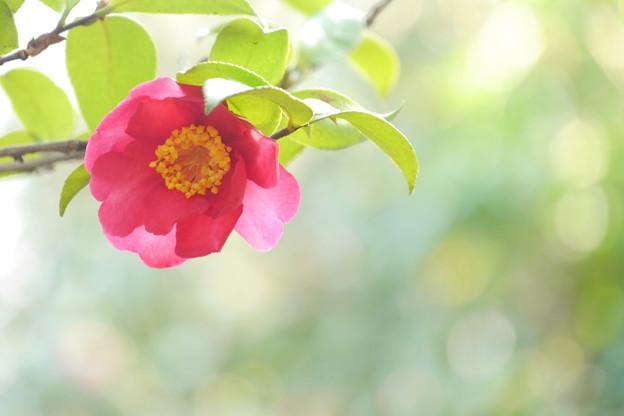 きらめきの春