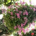 Photos: 花のある公園