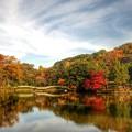 Photos: 薬師池公園の紅葉