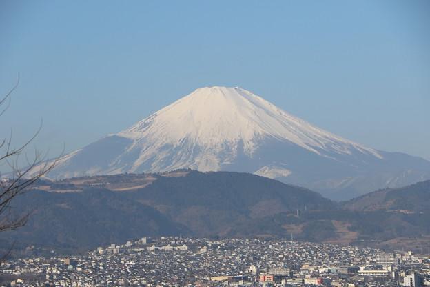 大きい富士山
