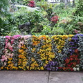写真: 花のディスプレー