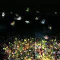 写真: 茨城県北芸術祭 125  チームラボ