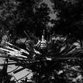 写真: 茨城県北芸術祭 305  小貝ケ浜