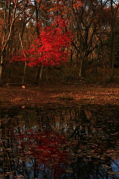 662 助川山 おむすび池