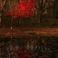 写真: 558 助川山 ひょうたん池