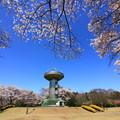 写真: 167 十王パノラマ公園  桜