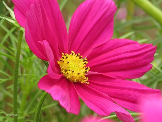 写真: 蕊が美しい。