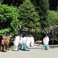Photos: 28.6.1志波彦神社鹽竈神社朔日祭