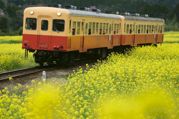 DSC01234(1)