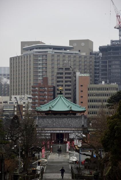 写真: 170209上野公園 (20)