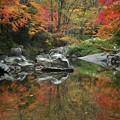 写真: 秋色を映して