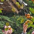 写真: 日本の秋にふれて・・