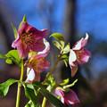 写真: さ~~春ですよ~
