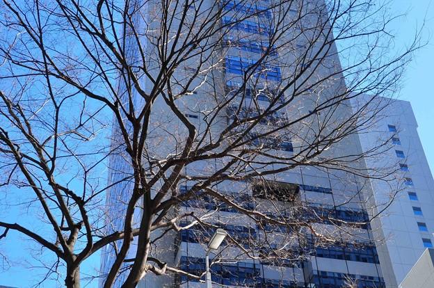 写真: 冬のビル