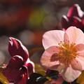 写真: 春のよろこびを