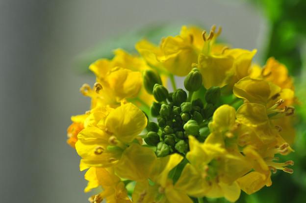 写真: ほろにがさは春の味