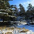 登山道は雪の中