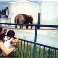写真: 旭川市 旭山動物園 1978年