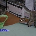 Photos: おいてけぼりぃ