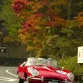 写真: 高野山の紅葉#4