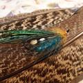 Photos: 10クジャクの羽根