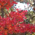 Photos: 12赤い葉
