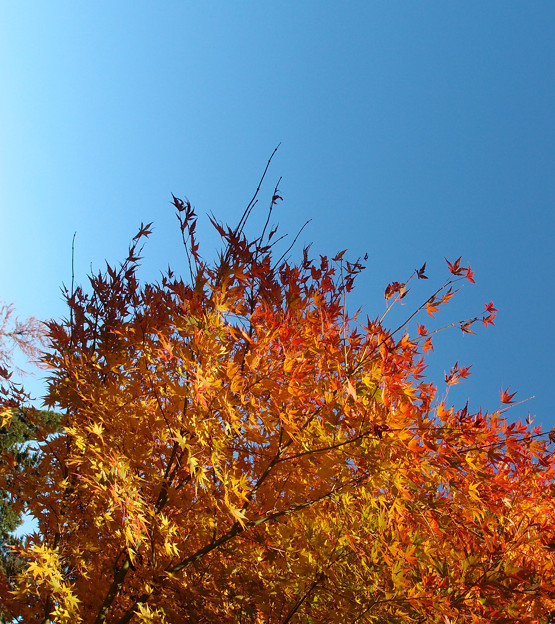 Photos: 13黄色い葉