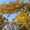 Photos: 02黄色も綺麗
