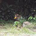 Photos: 野生猿の秋は厳し