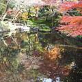 写真: 惜秋