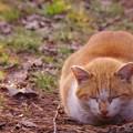 写真: 猫の日