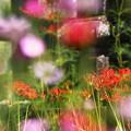 Photos: 花の墓所