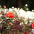 写真: Lights N' Roses