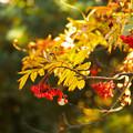 写真: 秋の輝き