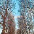 冬の散歩道.2
