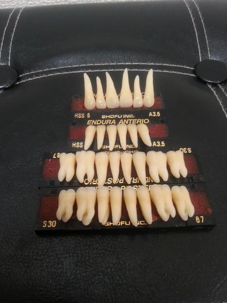 上下歯冠歯根28本フルコンプリート