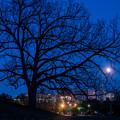 写真: 見守る樹