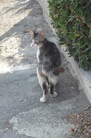 ラルナカのネコ0622