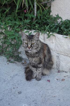 リマソールのネコ0625