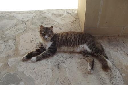 リマソールのネコ0627