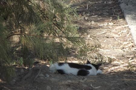 ラルナカのネコ0726