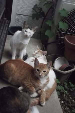ミケママ&子ネコ0830