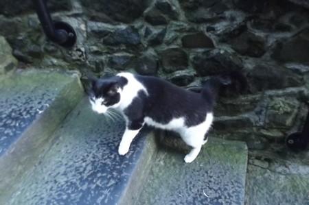 キルケニーのネコ0122