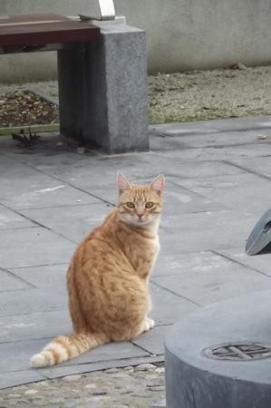 キルケニーのネコ0123