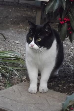 白黒ネコ0211