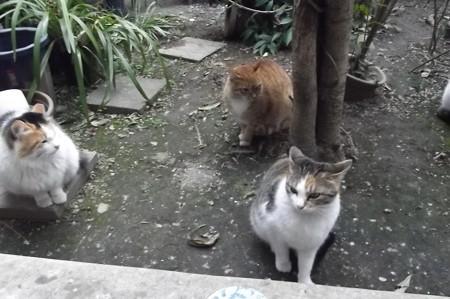 ミケママ、ミニチグ、ココ0214