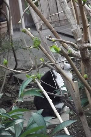 白黒ネコ0225