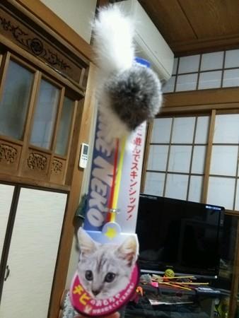 ネコじゃらし0402