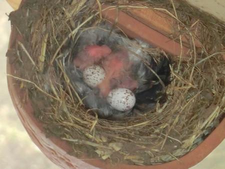 3羽さんの誕生